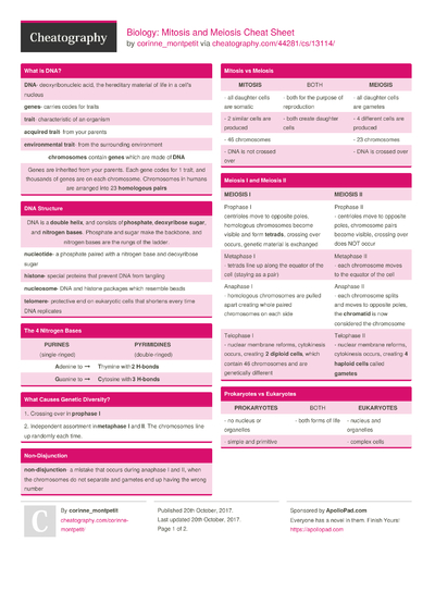 Biology: Mitosis and Meiosis Cheat Sheet