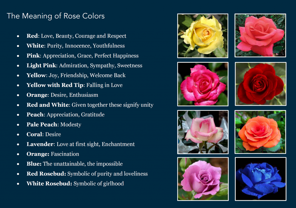 Colored roses their meanings cheat sheet by davidpol download roses mightylinksfo
