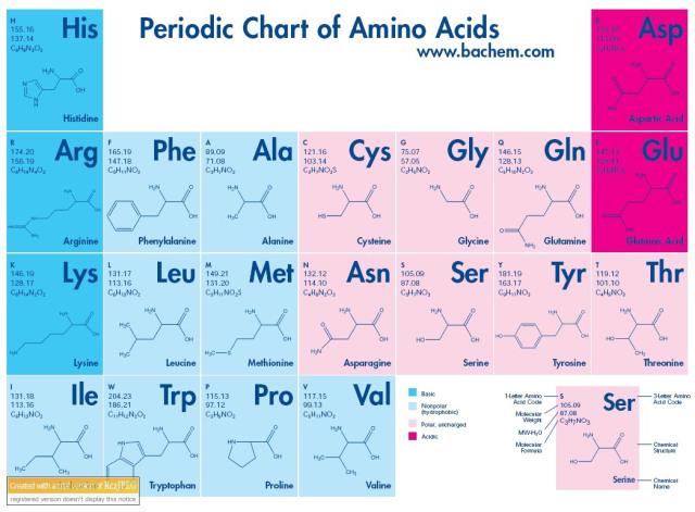 how to get essential amino acids