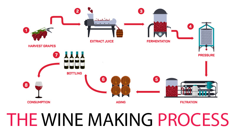 an analysis of the fermentation process in wine making Beer & wine the science of fermentation depending on the type of wine desired, this fermentation process may yeast fermentation and the making of beer and wine.