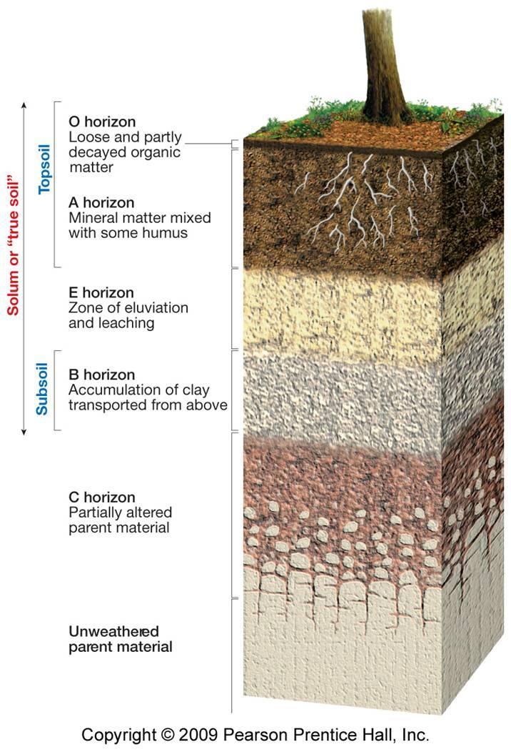 Soils of the world cheat sheet by leahs notes download for What is meant by soil